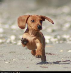 """Beach puppy, beach puppy, jump through the sand......"" hey Kristina his made me think of Jack :)"
