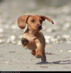"""""""Beach puppy, beach puppy, jump through the sand......"""""""