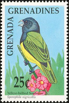 Stamps showing Yellow-bellied Seedeater Sporophila nigricollis, with distribution map showing range West Art, Finches, Vintage Stamps, Glam Rock, Pet Birds, Collections, Gallery, Image, Beautiful Landscapes