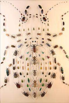 Todos os tamanhos | Audubon Insectarium, New Orleans | Flickr – Compartilhamento de fotos!