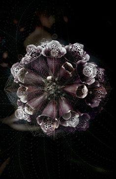 Tatiana Plakhova - Black Flower