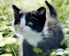 Kitty kittty !