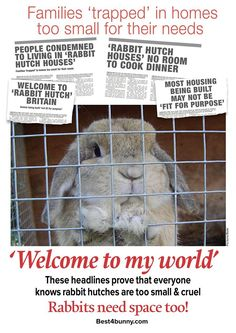 A hutch is not enough! Headlines like these really do prove that people know keeping rabbits in small hutches is cruel & that they subject bunnies to a very miserable life. http://best4bunny.com/
