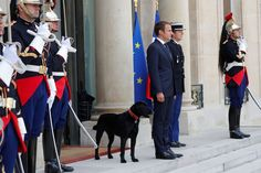 French President Emmanuel Macron, faced with tumbling popularity ratings, turned on Monday to a new aide: Nemo, a young dog adopted from a rescue shelter. Emanuel Macron, Adoption, Beaux Couples, Brigitte Macron, Paris Match, French President, Man And Dog, Finding Nemo, Pet Care