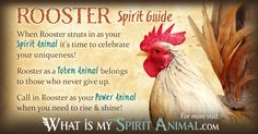 In-depth Rooster Symbolism & Rooster Meanings! Rooster as a Spirit, Totem, & Power Animal. Rooster in Celtic & Native American Symbols & Rooster Dreams, too!