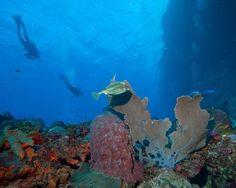 7 top American scuba diving destinations: Scuba divers above reef