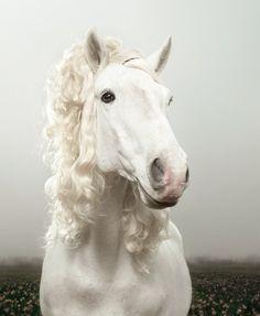 Horses : Julian Wolkenstein