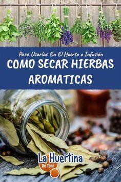 Growing Seeds, Herbs Indoors, Edible Plants, Lab, Salvia, Medicinal Plants, Natural Medicine, Kraut, Growing Vegetables