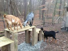 IMG_3301 Goat Playground, Chapel Hill, Carriage House, Christmas Presents, Goats, New Baby Products, Animals, Xmas Gifts, Animales