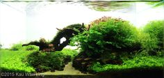 Top Ten Nano Aquascape AGA 2015 bridge nano-aquascape Aquajaya
