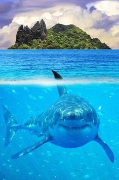 Tubarão Branco Peixe predador de maiores dimensões existente na atualidade. Um tubarão-branco pode atingir 7,5 metros de comprimento e pesar até 2,5 toneladas. Esta espécie vive nas águas costeiras de todos os oceanos, desde que haja populações adequadas das suas presas.