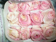 56 Super Ideas Garden Rose Keira Other Parfum Flower, Front Porch Garden, Garden Shed Diy, Mosquito Repelling Plants, Diy Garden Furniture, Flower Company, David Austin Roses, Herbs Indoors, Local Florist