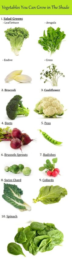 Vegetables you can grow in the shade.