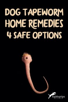 If you try to stay away from over-the-counter and prescription treatments, you can try one of these dog tapeworm home remedies. Home Remedies, Natural Remedies, Organic Pumpkin Seeds, Pregnant Dog, Dog Health Tips, Healthy Oils, Good Advice, Dog Care