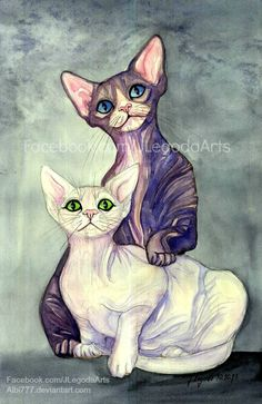 Sphynx Cats :) birthday gift for my brother in law :)