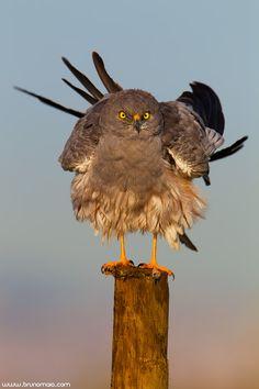 Bird by Bruno Maia