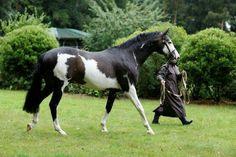 horse horses pinto beautiful cool nice pintohorse
