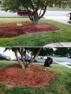 Hire gardener Afredo M Carranza for all your yard and landscape maintenance needs. He is among the professional gardeners who also do leaf pick-up, junk and tree removal, grass cutting and more.