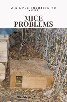 Problems Learn how to build and use this mouse box. It is a simple solution to your mice problems.Learn how to build and use this mouse box. It is a simple solution to your mice problems. Fall Vegetables, Organic Vegetables, Mice Problems, Organic Gardening, Gardening Tips, Shade Loving Shrubs, Landscaping Around Trees, Grow Your Own Food, Grow Food