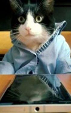 #Microsoft promociona celulares usando gatitos