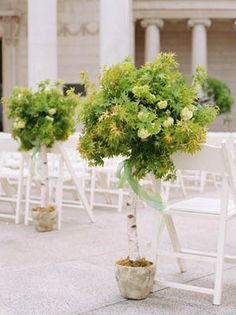 Photo Via Wedding Plantswedding Treeswedding