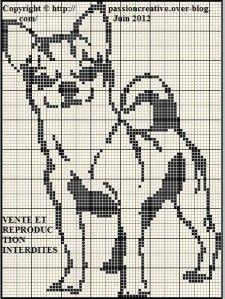 Chien---Chihuahua-monoc hrome.jpg