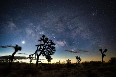 joshua tree at night - Google Search