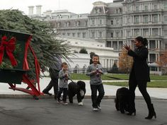 #FirstLady Of The United States #MichelleObama welcomes #LAST and #FINAL #Christmas #Tree of Obama Administration #WhiteHouse Friday November 25, 2016 The tree is a 19-foot Douglas Fir, which was donated to the White House by a tree farm in Pennsylvania and delivered on a horse-drawn cart. First Lady Michelle Obama was joined by first dogs Bo and Sunny, as well as two of her #nephews