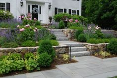 Carey Ezell Landscape Design. Front approach with blue stone walkway and field stone walls. Peonies and cat mint in bloom.