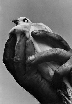 Harold Feinstein-A BIRD IN HAND