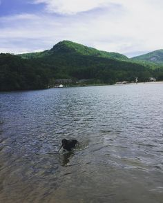 Zoe fishing for sticks in Lake Lure