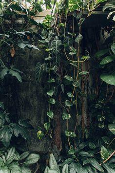 garden photography University of Cambridge Botanic Garden, photographed by Haarkon Plant Aesthetic, Nature Aesthetic, Goth Aesthetic, Green Plants, Tropical Plants, Palm Plants, Bamboo Plants, Plants Indoor, Shade Plants