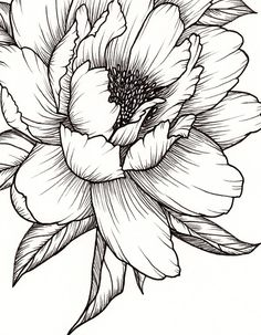 Peony Flower Art PRINT of Pen Illustration Flower Drawing Floral Tattoo Botanical Line Drawing Feminine Art Peony Tattoo Wall Decor Drawing Art Botanical Decor drawing Drawing flowers feminine Floral flower illustration line pen peony Print Tattoo Wall Peony Drawing, Flower Art Drawing, Flower Line Drawings, Botanical Line Drawing, Floral Drawing, Flower Sketches, Art Drawings, Drawing Ideas, Drawing Drawing