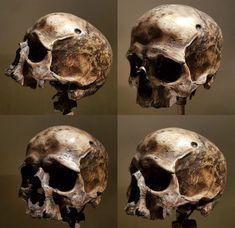 Skull Tattoos, Body Art Tattoos, Graffiti 3d, Airbrush Skull, Skull Reference, Skull Anatomy, Skull Sketch, Skull Island, Air Brush Painting