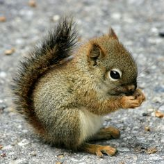 Baby squirrel                                                                                                                                                                                 More