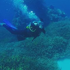 #diving in #cairns at the #greatbarrierreef. One of the greatest #experiences ever. #vacay #tourist by robbywong http://ift.tt/1UokkV2