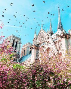 Cathédrale Notre-Dame de Paris | © Lesia