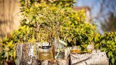 Cibulové slupky nevyhazujte! 10 nejlepších tipů, jak je využít Detox, Table Decorations, Plants, Home Decor, Decoration Home, Room Decor, Plant, Home Interior Design, Dinner Table Decorations