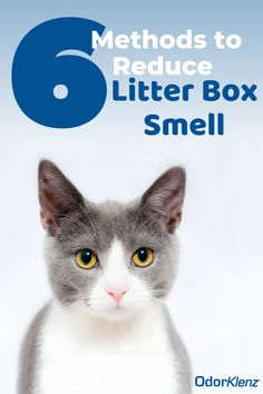 Learn 6 methods to reduce the smell of pet litter boxes in your home! Cat Pee Smell, Cat Urine Smells, Dog Smells, Litter Box Smell, Cat Urine Remover, Pet Odor Eliminator, Pet Odors, Cat Boarding, Pet Care