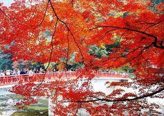 「愛知高原国定公園」に位置する渓谷「香嵐渓」も、日本有数の紅葉の名所です。毎年秋になると、多くの観光客で賑わいをみせます。