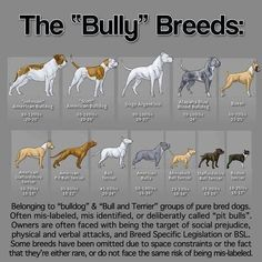 .Had no idea that a Boxer was a bull dog, or that little Boston. What about the French???: