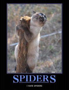 Cat and spider