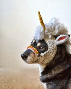 Sometimes I feel bad when I dress up my male dog in a Snow White costume but then I see pictures like this and suddenly I'm not so bad.