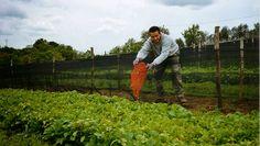 Allevamento di Lumache - Metodo Cantoni: naturale e certificato