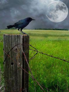 6725612a78eb6fed11420c9b4e2e0d83--moon-watch-fence-posts.jpg (732×979)