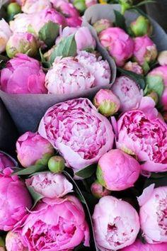 bloom pink peonies. one of my favorite flowers!