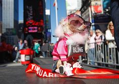 Doggy Divas! Pampered Pooches From Around The World