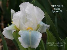 Iris TEAGAN   Stout Gardens at Dancingtree