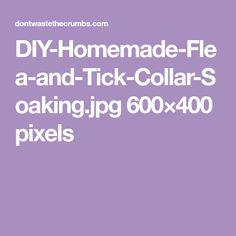DIY-Homemade-Flea-and-Tick-Collar-Soaking.jpg 600×400 pixels