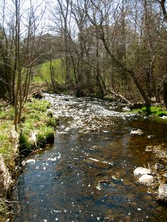 How kids can benefit from playing in a creek.
